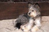 Adorable shaggy dog — Stock Photo
