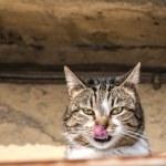 Countryside cat closeup — Stock Photo #64987671