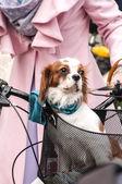 Pies stoi kosz rowerowy — Zdjęcie stockowe