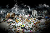 Cattle eating plastic — Foto Stock
