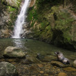 Baby seal in natural forest pool with waterfall — Stock Photo #59204829
