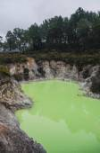 Lake all green from pollution — Stock Photo