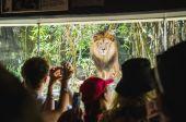 Hayvanat bahçesindeki aslan — Stok fotoğraf