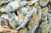 Crabs and lobster at the fish market — Stock Photo