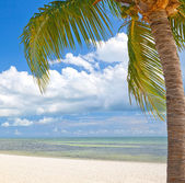 Palm trees on the beach ion Key West Florida — Stock Photo