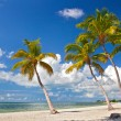 Tropical summer paradise in Key West Florida — Stock Photo #59041631