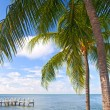 Palm trees, ocean and blue sky on a tropical beach in Florida keys — Stock Photo #63763239