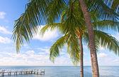 Palm trees, ocean and blue sky on a tropical beach in Florida keys — Stock Photo