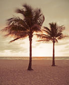 Miami Beach, Florida colorful summer sunrise or sunset with palm trees — Stock Photo
