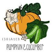 Pumpkin and cucumber  — Stock Vector