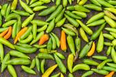 Chiles asado — Foto de Stock