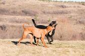 Running battle — Stock Photo