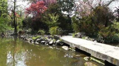 春には日本庭園 — ストックビデオ