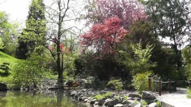 Japanese Garden in Springtime — Stock Video