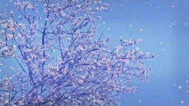 Bloeiende bomen, bloemen en blaadjes vallen — Stockvideo