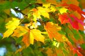 Autumn leaves background. — Stock Photo