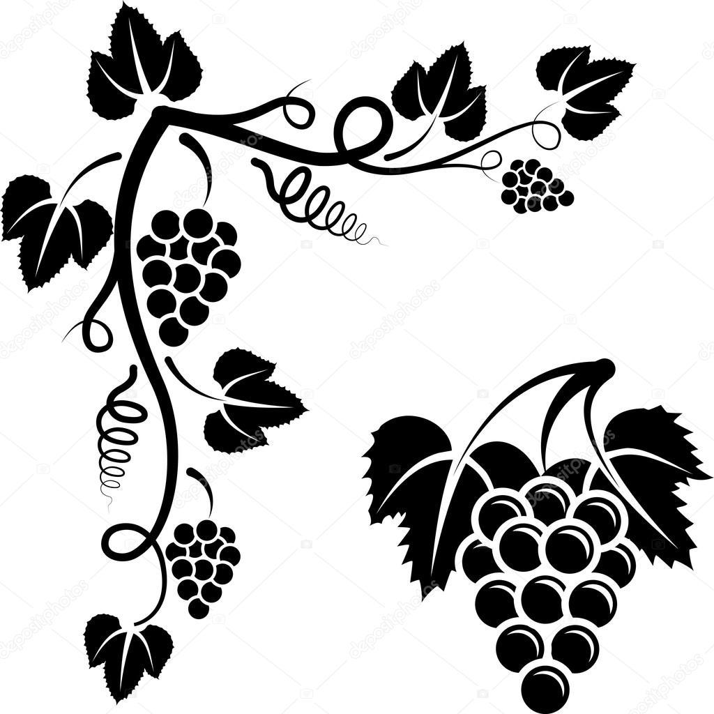 Оидиум фото винограда  меры борьбы  Сайт о саде даче
