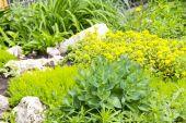 Garden fragment landscaping — Stock Photo
