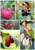 Autumn fruits and berries — Stock Photo
