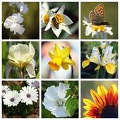 Collage with beautiful white and yellow flowers — Stock Photo