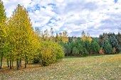 Autumn landscape 83 — Stock Photo