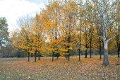 Autumn landscape 82 — Stock Photo