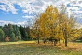Autumn landscape 84 — Stock Photo