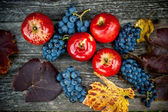 Autumn harvest at vineyard and farm with ripe grapes and red apples, fresh and organic fruits ready — Stock Photo