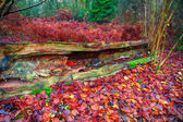 Old fallen tree rotting in forest — Stock Photo