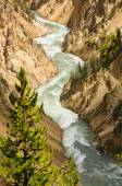 River flowing in National Park — Stock Photo