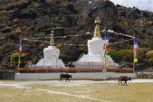 Tibetian stupas and cows — Stock Photo