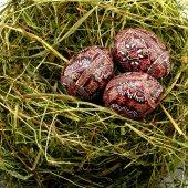Eggs on hay  — Stock Photo
