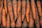 Fresh garden carrots  — Stock Photo