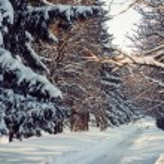 Winter park — Stok fotoğraf #54999001