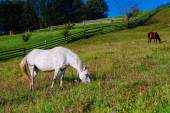 Horse on ranch — Stock Photo