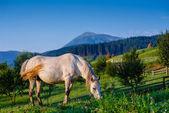 Muzzle HORSE — Stock Photo