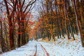 First snow in the forest. — Stock Photo