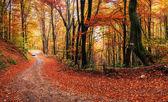 Callejón de otoño — Foto de Stock
