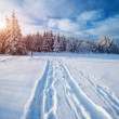 Winter road — Stock Photo #57102437