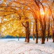 October mountain beech forest with first winter snow — Stock fotografie #58079805