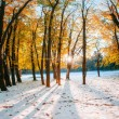 October mountain beech forest with first winter snow — Stock Photo #58080023
