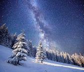 Magic tree in starry winter night — Stock Photo