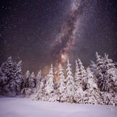 Starry sky and trees in hoarfrost — Stock Photo
