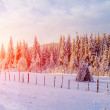 Beautiful tree in the snow on a sunny winter day — Stock Photo #58890565