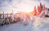Beautiful tree in the snow on a sunny winter day  — Stock Photo