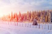 Beautiful tree in the snow on a sunny winter day  — Stockfoto