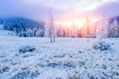 Winter landscape trees in frost  — Foto Stock