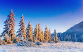 Magical winter snow covered tree  — Stock Photo