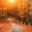 Car on a forest path — Stock Photo #59382835