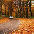 Car on a forest path — Stock Photo #59429963